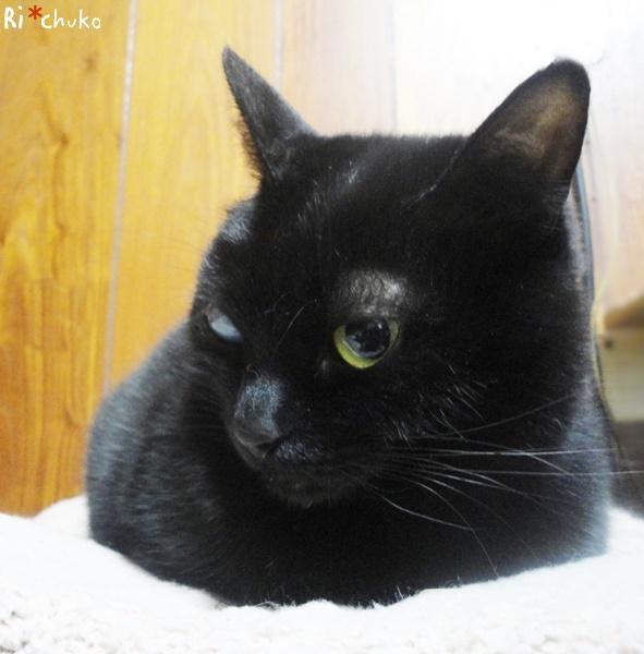 黒猫りちゅこ、6歳
