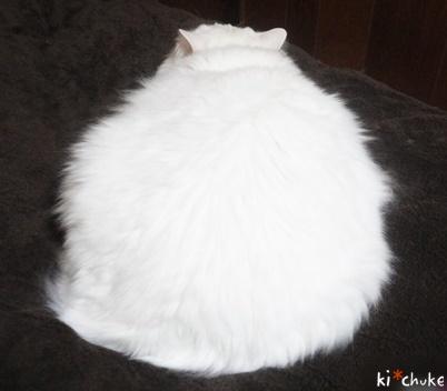 白猫きーちゅけの鏡餅(下?)