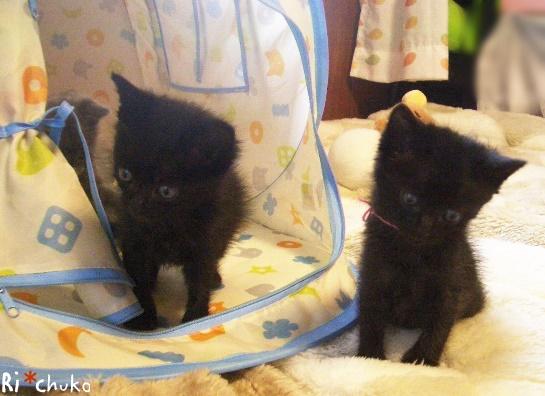 黒猫りちゅこ、おそろ