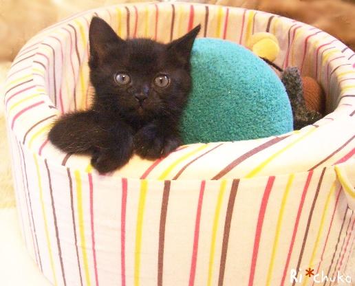 黒猫りちゅこ、かわいい
