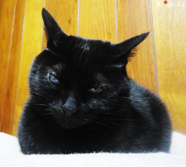 黒猫りちゅこ、元気です