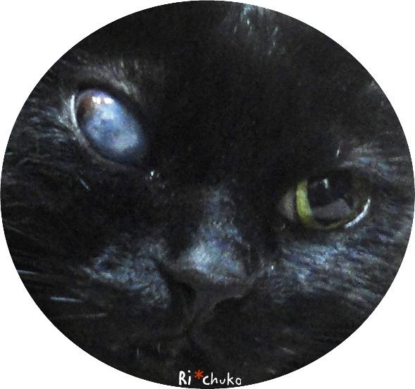 黒猫りちゅこ、宇宙がある