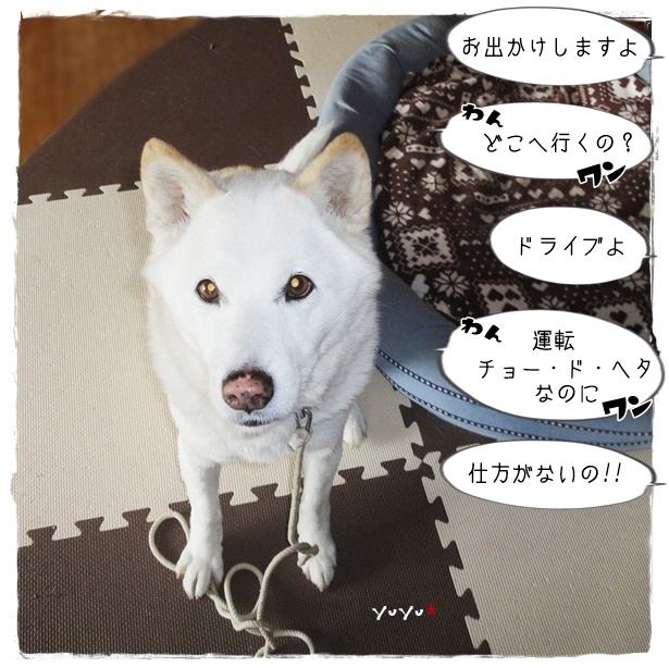 f:id:nyan-chuke:20190410165348j:plain