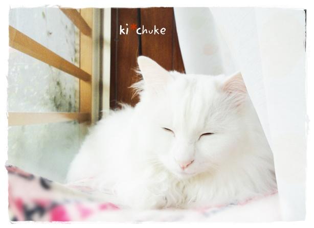 f:id:nyan-chuke:20190503150128j:plain