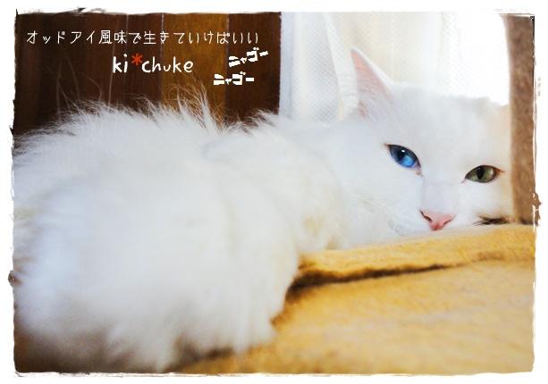 f:id:nyan-chuke:20190519150928j:plain