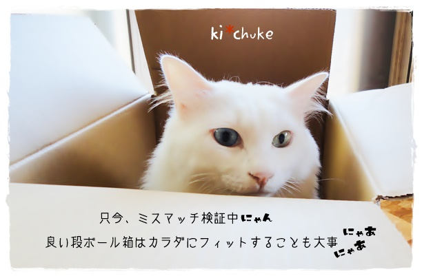 f:id:nyan-chuke:20190609204826j:plain