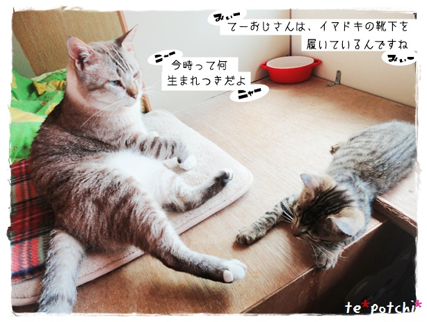 f:id:nyan-chuke:20190724000220j:plain