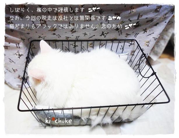 f:id:nyan-chuke:20190808154856j:plain