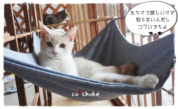 f:id:nyan-chuke:20191006141237j:plain