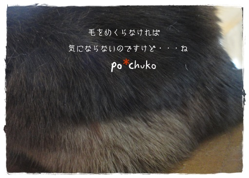 f:id:nyan-chuke:20191204002916j:plain