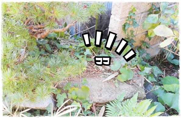 f:id:nyan-chuke:20201201214427j:plain