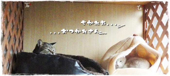 f:id:nyan-chuke:20210320154727j:plain