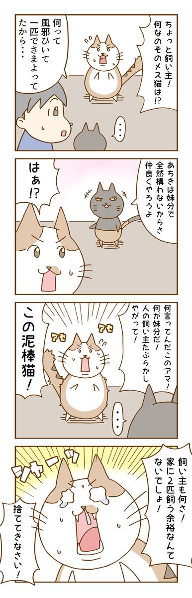 うちの猫のあずきもなか「先住猫と保護猫のご対面 その2」