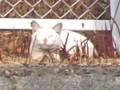 自宅裏駐車場フェンス前の猫
