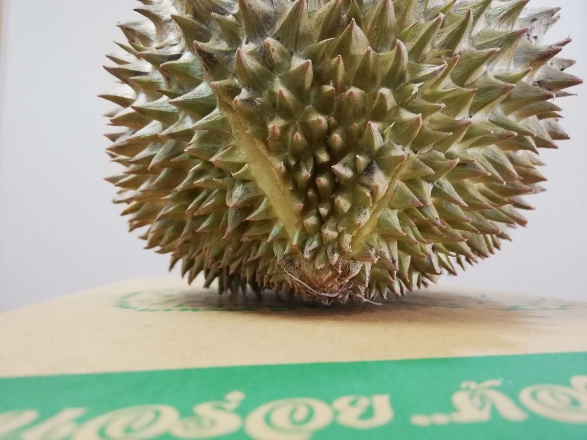 f:id:nyanta-maew:20210628121056j:plain