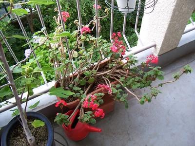 ベランダにあった変な鉢植え