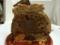 ラブリコチエのポロネーズドートンヌ