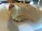 ナッシュカッツェのバタープレッツェル