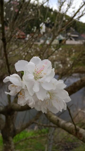 f:id:nyaosuke-2301:20210413102206j:image
