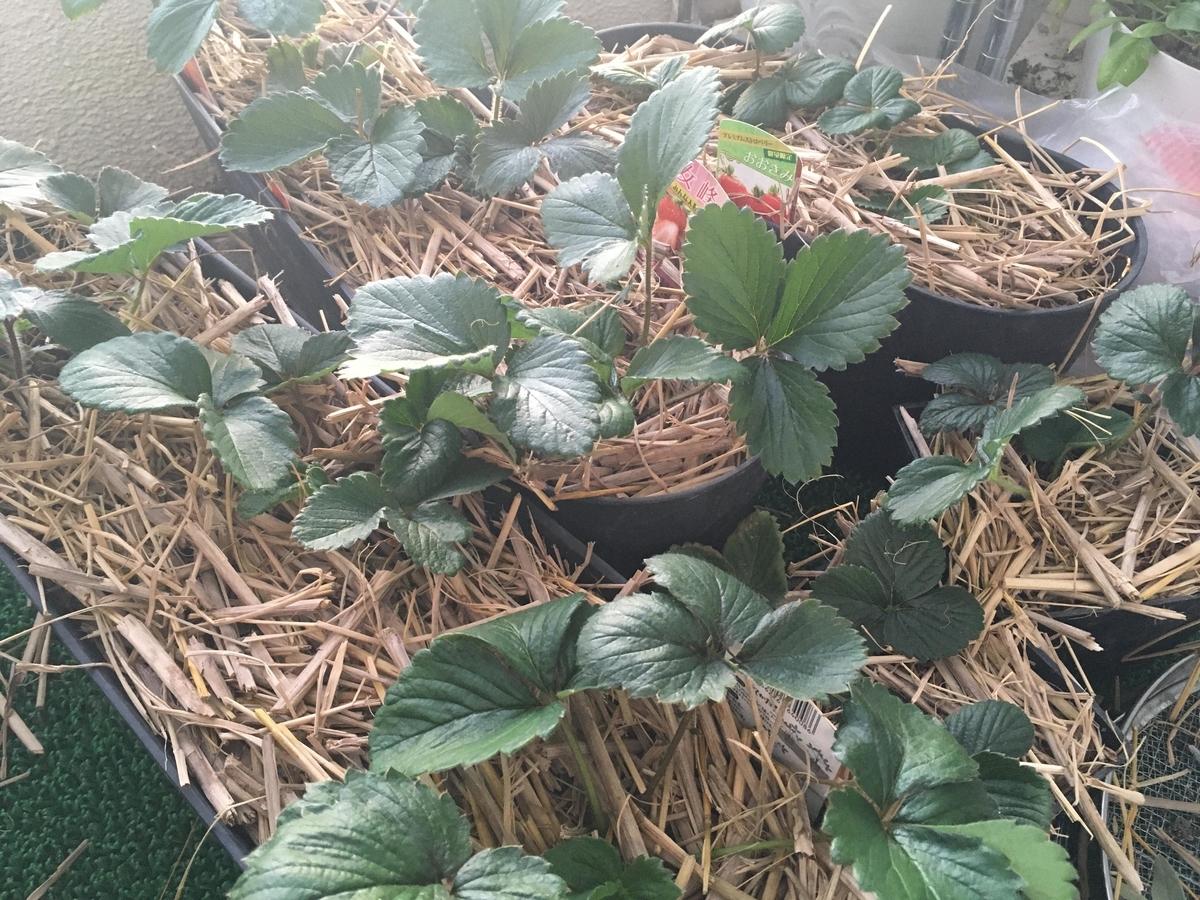 f:id:nyasan-harvest:20191115112027j:plain:w500
