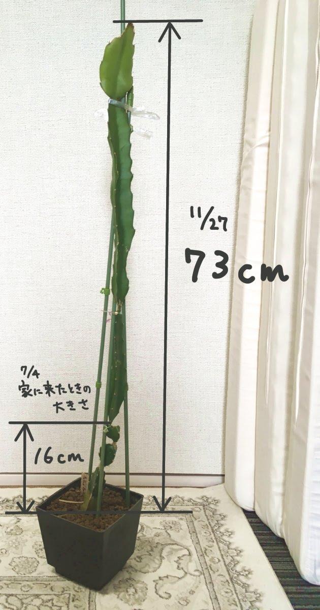f:id:nyasan-harvest:20191127132136j:plain:h500