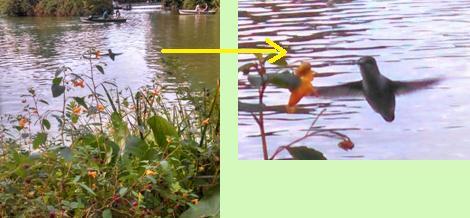 f:id:nykanjin:20140915223956j:image:left
