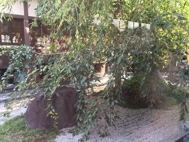 桜の木:plain