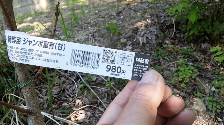 f:id:o-katsumi:20190528121643j:plain