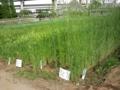足立区立農業公園は田畑、果樹園、温室、古民家など農家を体験できる