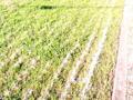 埼玉県さいたま市見沼区の見沼田んぼという上尾~川口市へ続く農耕地