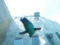 [風景][動物]146:旭山動物園・ペンギン館…水槽のトンネルにて/2008.07.27