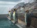 [風景][動物]148:旭山動物園・ペンギン館/2008.07.27