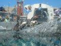 [風景][動物]150:旭山動物園・ペンギン館/2008.07.27