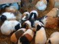 [風景][動物]162:旭山動物園・こども牧場/2008.07.27