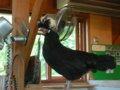 [風景][動物]163:旭山動物園・こども牧場/2008.07.27