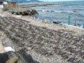 [風景]273:朝里海岸・石浜に並べられたコンブ/2008.07.26