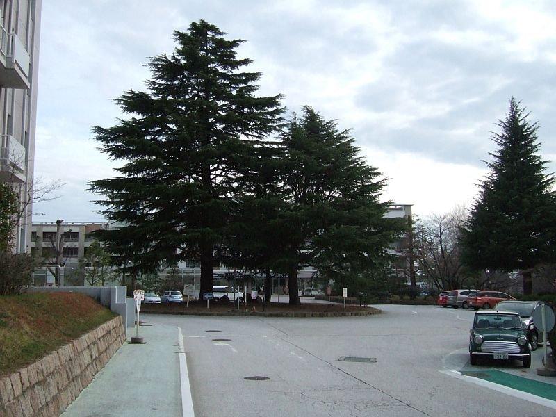 神戸大学文学部校舎前ロータリー100227