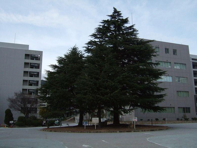 神戸大学文学部校舎前ロータリー(農学部校舎方向)100227