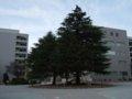 [風景]神戸大学文学部校舎前ロータリー(農学部校舎方向)100227