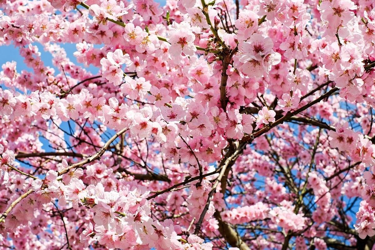 春には桜が舞い散り翼は広げるもの