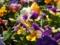 ガーデンの花 2013/6