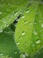 [水滴][草]6月27日 札幌は雨