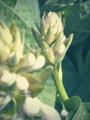 [花]大通公園で撮影