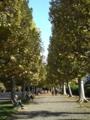 新宿御苑にきた。並木道は秋の装いだ