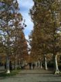 秋の新宿御苑にきた