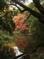 秋の新宿御苑その2
