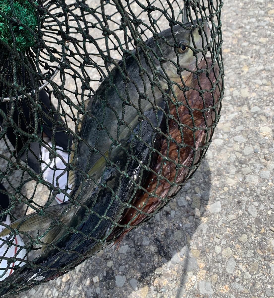 釣った魚たち