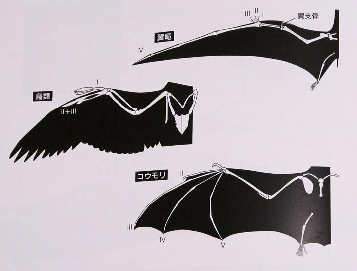f:id:occulthiroba3088:20190916222130j:plain