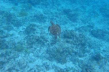 f:id:oceansguam:20170628165504j:plain