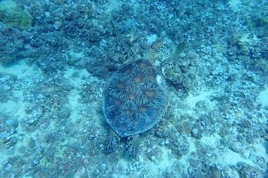 f:id:oceansguam:20170711164419j:plain